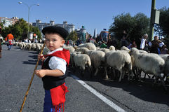 Transhumance in Madrid - Spain Royalty Free Stock Images