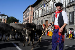 Transhumance in Madrid - Spanien Stockbilder