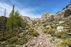 Transhumance pathway in Golo valley in Corsica Royalty Free Stock Image