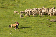 The transhumance Royalty Free Stock Photography