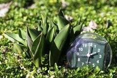 A transição às horas de verão, a chegada da mola, o pulso de disparo na grama verde da mola ao lado da flor não florescida nova d imagem de stock