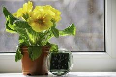 A transição às horas de verão, a chegada da mola, a posição do pulso de disparo no janela-peitoril sol-embebido ao lado da flor a imagens de stock royalty free