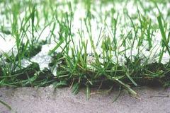 a transição do outono ao inverno Cristais de gelo brancos da geada na grama verde do gramado na manhã imagens de stock royalty free