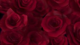 Transición de las rosas roja stock de ilustración