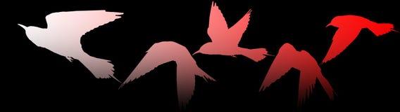 Transición del flash a la atenuación de las siluetas de los pájaros Imagen de archivo libre de regalías