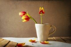 Transience Still life tulips cup petals. Transience: Still life with tulips in a cup Stock Images