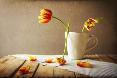 Transience Still life tulips cup petals. Transience: Still life with tulips in a cup Royalty Free Stock Images