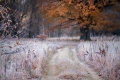 Transition d'automne à l'hiver photographie stock