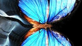 Transition par un papillon avec l'effet de queue