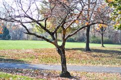Transition. S seasons from Fall to Winter. No more leaves on the trees royalty free stock images