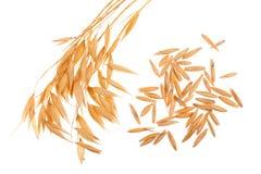 Transitoire d'avoine avec des grains d'isolement sur le fond blanc images libres de droits