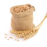 Transitoire de blé et grain de blé dans le sac de toile de jute d'isolement sur le fond blanc image stock