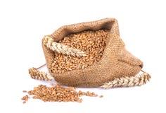 Transitoire de blé et grain de blé dans le sac de toile de jute d'isolement sur le fond blanc image libre de droits