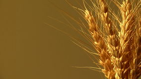 Transitoire de blé tournant 360 banque de vidéos