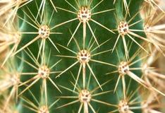 Transitoire de cactus dans le jardin photo libre de droits