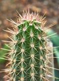 Transitoire de cactus dans le jardin image stock
