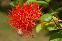 Transitoire de fleur image stock