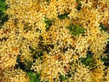 Transitoire de fleur photos stock