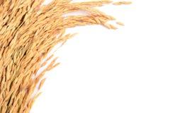 Transitoire de riz photos libres de droits