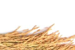 Transitoire de riz image stock