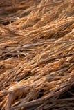 Transitoire de riz photo stock
