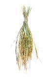 Transitoire de riz de jasmin. d'isolement Image stock