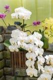 Transitoire des orchidées blanches photos libres de droits