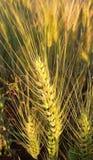 Transitoire et grain photos stock