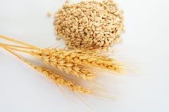 transitoire et grains de blé image stock