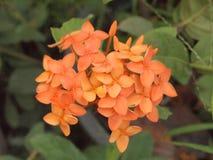 Transitoire orange de fleur images libres de droits