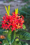 Transitoire rouge de fleur Photo libre de droits