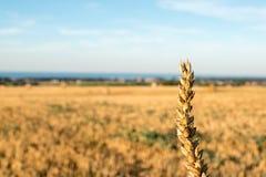 Transitoire simple de grain photographie stock libre de droits