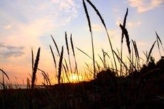 Transitoires au soleil photographie stock libre de droits