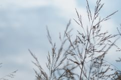 Transitoires d'herbe sur le fond naturel photos libres de droits