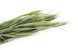 Transitoires de blé photos stock