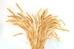 Transitoires de blé au milieu du cadre photos stock