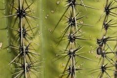 Transitoires de cactus Images libres de droits