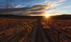 Transitoires de Sun au-dessus d'un vignoble rouge à Estella photos libres de droits