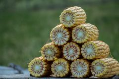 Transitoires empilées de maïs photographie stock libre de droits