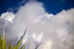 Transitoires et nuages en verre images stock