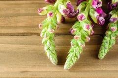 Transitoires pourpres de fleur sur le fond en bois image libre de droits