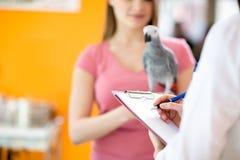 Transkrybować terapię chora papuga w weterynarz stacjonarce Zdjęcia Royalty Free