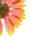 Translucent Beauty Royalty Free Stock Image