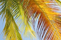 Translucent fronds royalty free stock photo