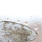 Translucent leaf and rain drops on window glass Royalty Free Stock Photos