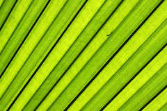 Translucent leaves color green stock image