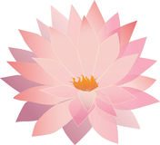 Translucent lotus flower Stock Photo