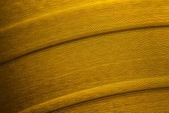 Translucent orange vinyl record Royalty Free Stock Photo