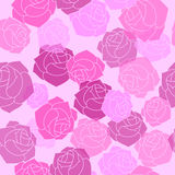 Translucent rose variety pink, burgundy colour. Floral seamless Stock Photo