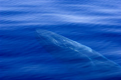 Translucent sea Stock Image